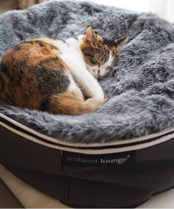 アンビエントラウンジの猫ベッド