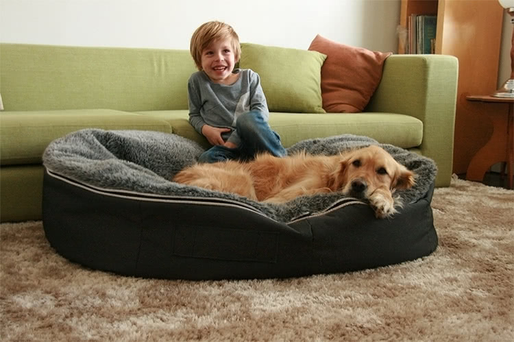 Boy and happy dog on Ambient Lounge pet bed